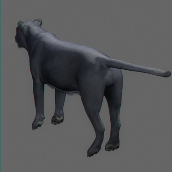 panther pantera tiger cat 3d model - Panther... by NONECG