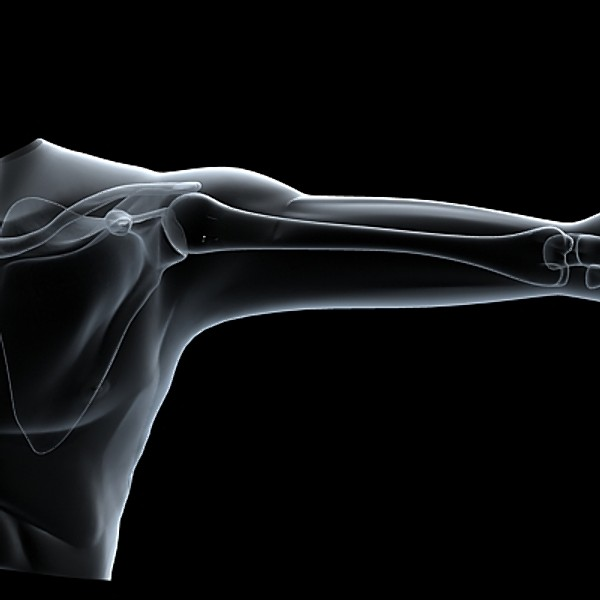 shoulder upper limb 3d 3ds - Shoulder & upper limbs.zip... by RadioMatrix
