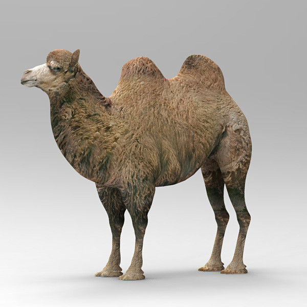 camel 2 3d model - Camel 2... by 3d_Wanderer
