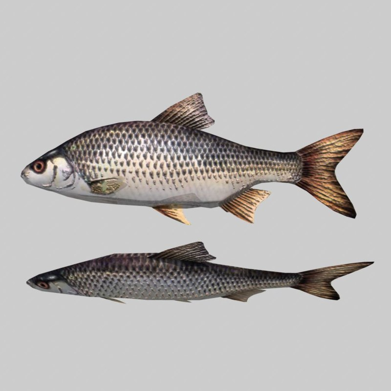 fish.10.jpg