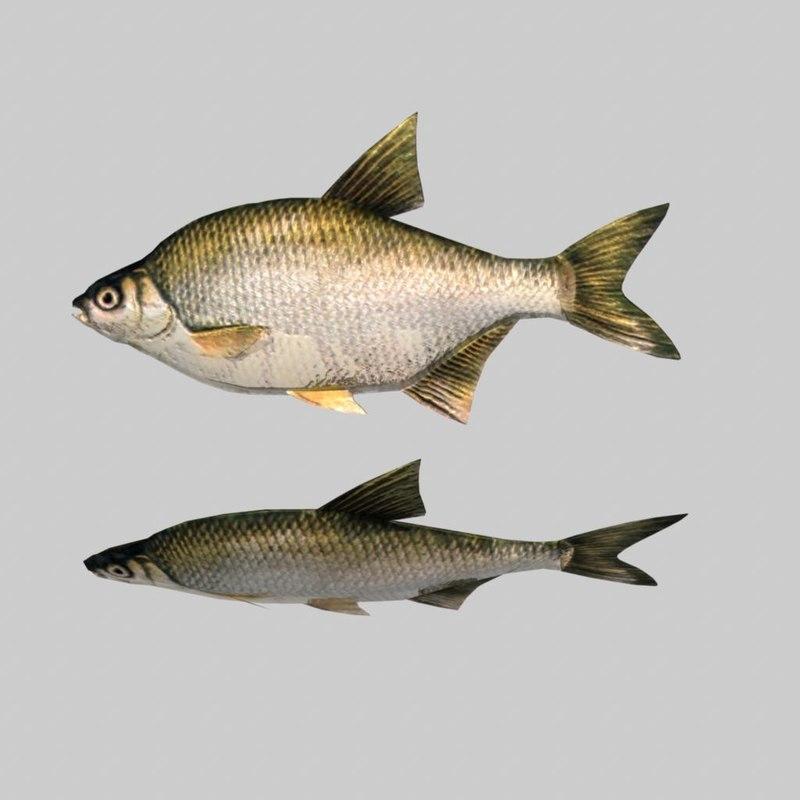 fish.4.jpg
