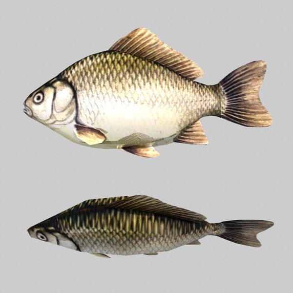 3d river sea fish - Fish Crucian Carp... by icreate