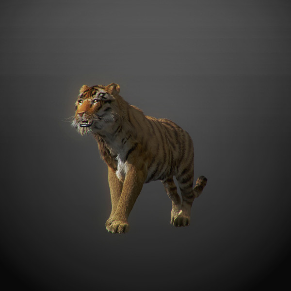 3ds max tiger fur - Animated Tiger... by NONECG