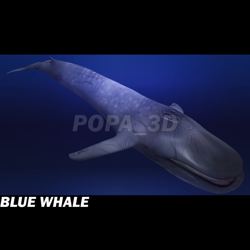 BlueWhale-a.jpg