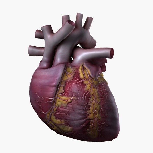 3d human heart - Heart High Quality... by valdic