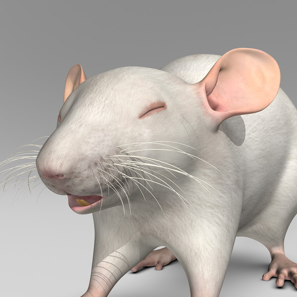 3ds max white rat rat white by motioncow