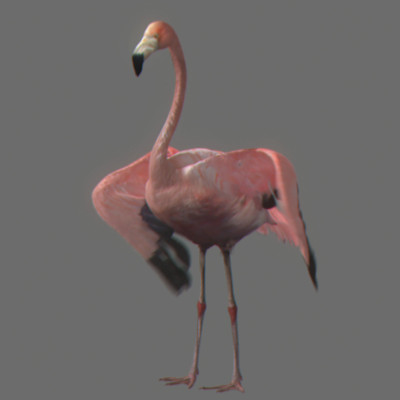 crow flamingo parrots 3d model - Pack - Birds Animated... by NONECG