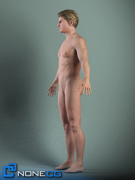 realistic male man anatomy 3d model - Adult Male Brian... by NONECG