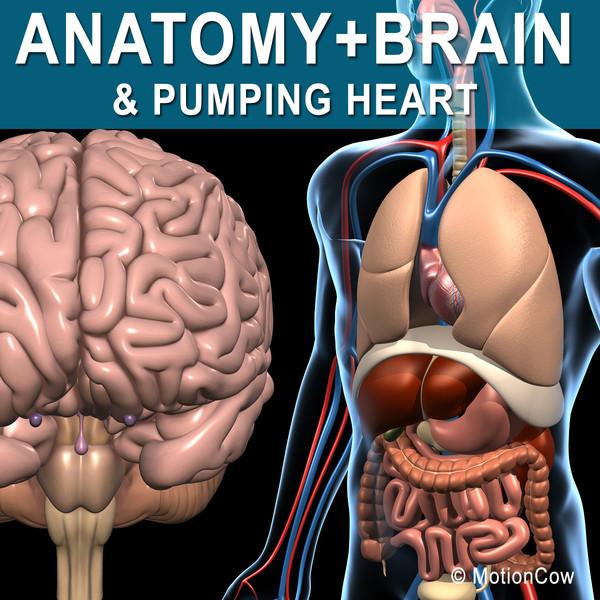 Anatomy & Brain 3D Models