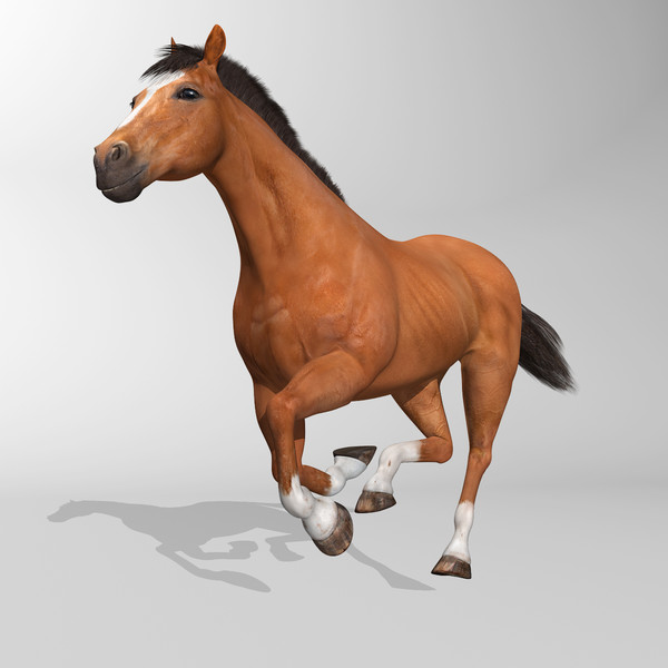 maya brown looped galloping - Horse ( Brown )... by MotionCow