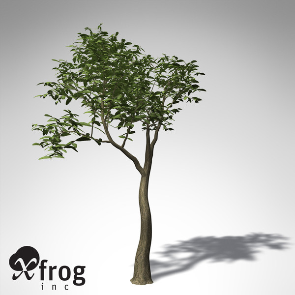 3d xfrogplants arrow poison tree - XfrogPlants Arrow Poison... by xfrog
