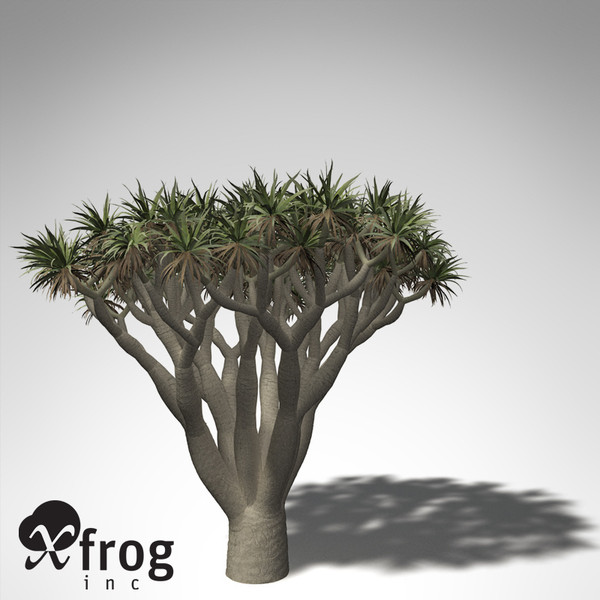 xfrogplants dragon tree 3d obj - XfrogPlants Dragon Tree... by xfrog