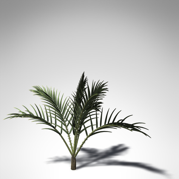 3d xfrogplants senegal date palm model - XfrogPlants Senegal Date Palm... by xfrog