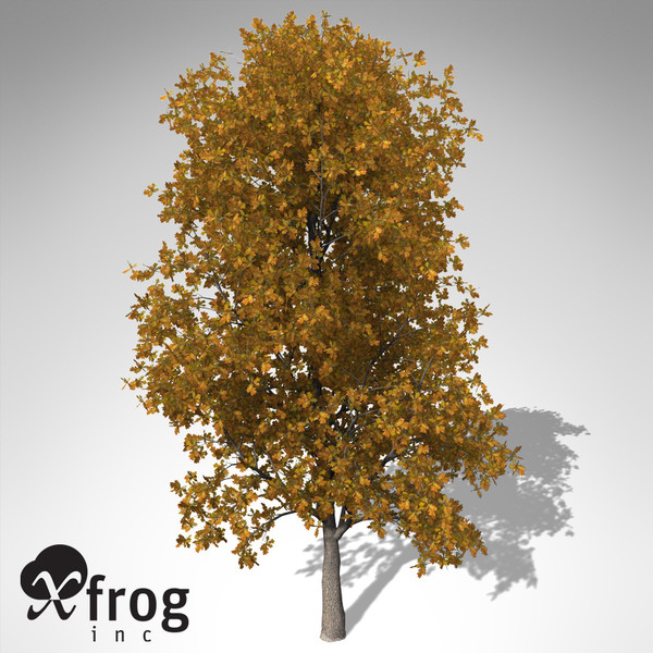 XfrogPlants Autumn English Oak Texture Maps
