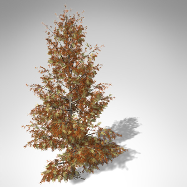 3dsmax xfrogplants autumn bald cypress - XfrogPlants Autumn Bald Cypress... by xfrog