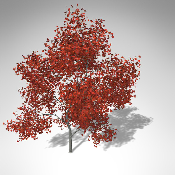 xfrogplants autumn japanese maple 3d 3ds - XfrogPlants Autumn Japanese Maple... by xfrog