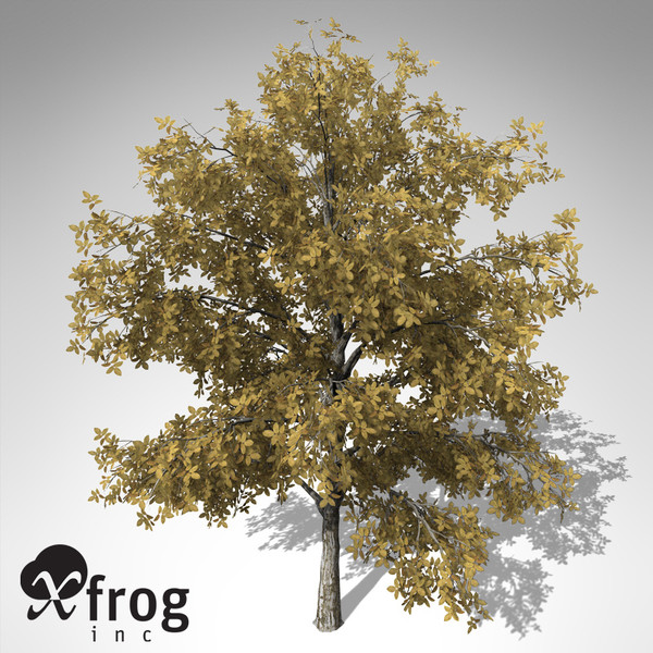 3d xfrogplants autumn european walnut model - XfrogPlants Autumn European Walnut... by xfrog