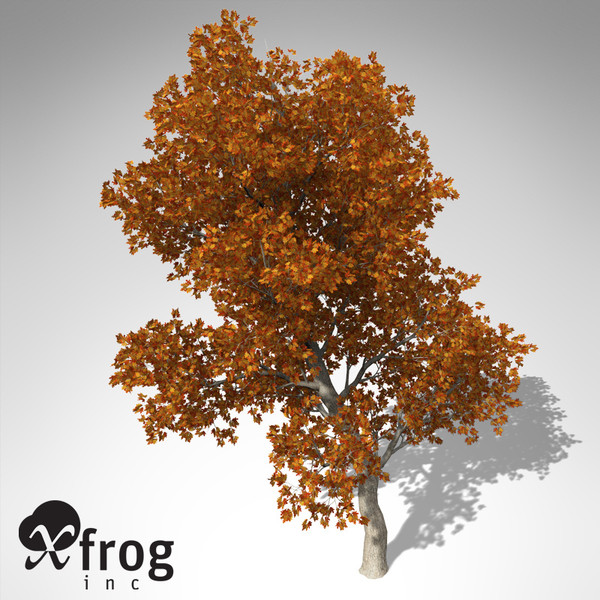 c4d xfrogplants autumn red oak - XfrogPlants Autumn Red Oak... by xfrog