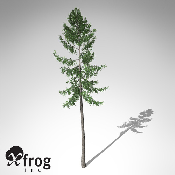 xfrogplants norway spruce tree 3ds - XfrogPlants Norway Spruce... by xfrog