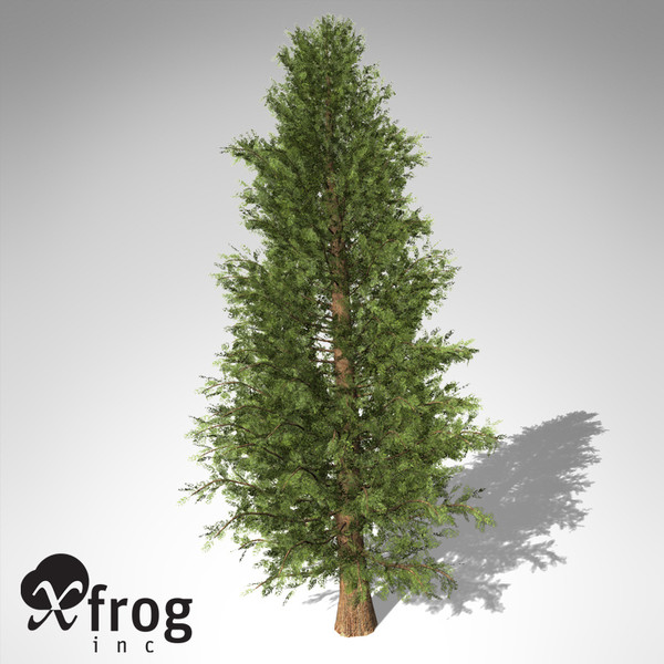 3d xfrogplants western red cedar model - XfrogPlants Western Red Cedar... by xfrog