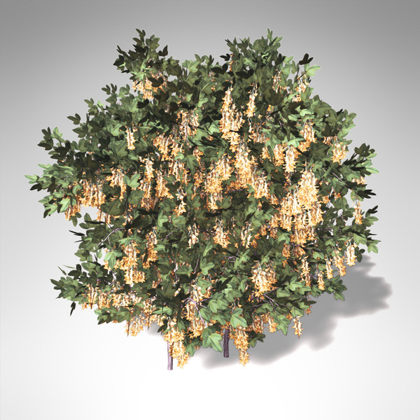 3d lwo xfrogplants blossoming golden chain - XfrogPlants Blossoming Golden Chain... by xfrog