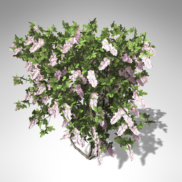 xfrogplants blossoming crape myrtle 3d model - XfrogPlants Blossoming Crape Myrtle... by xfrog