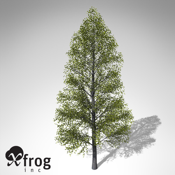 3d xfrogplants black alder tree model - XfrogPlants Black Alder... by xfrog