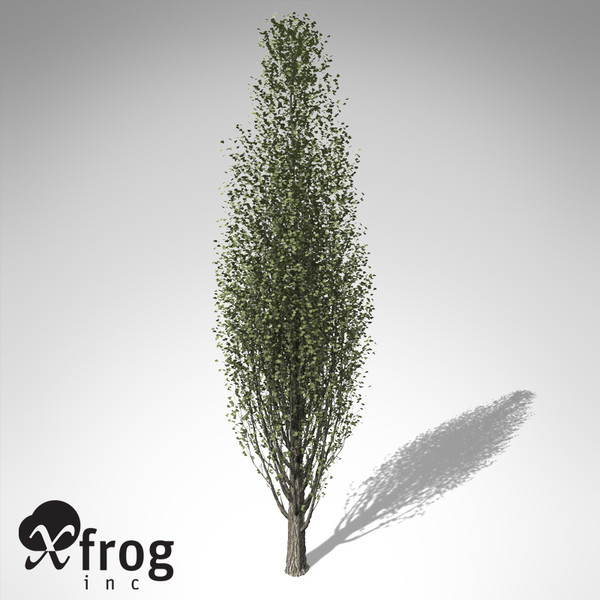 maya xfrogplants lombardy poplar tree - XfrogPlants Lombardy Poplar EU... by xfrog