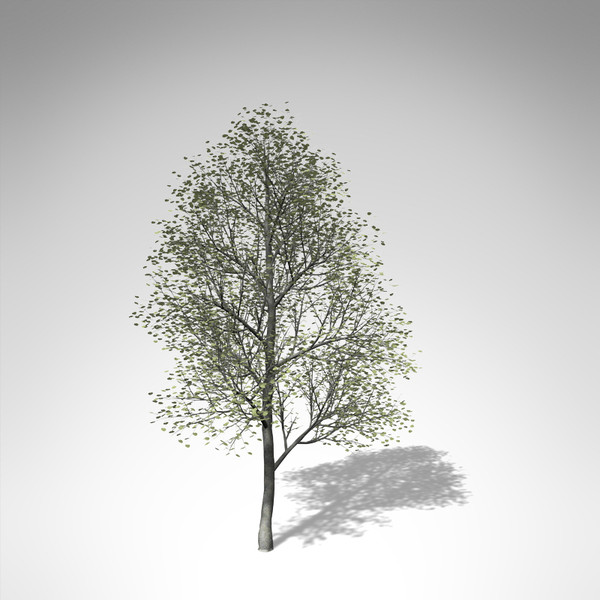 3d xfrogplants silver linden tree model - XfrogPlants Silver Linden... by xfrog