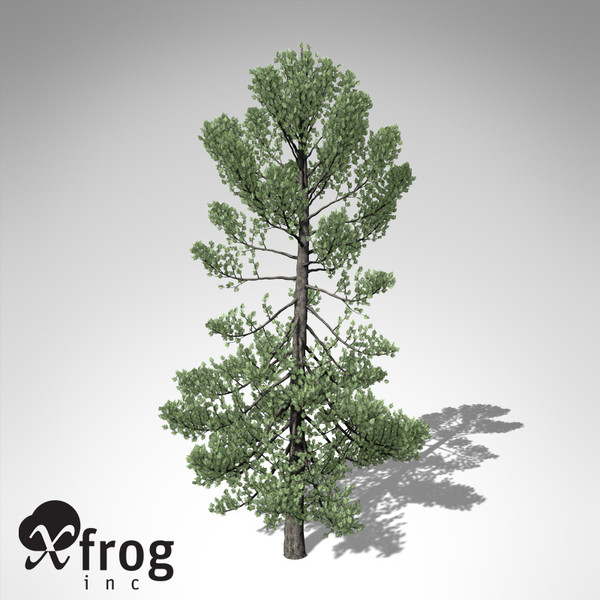 maya xfrogplants swiss stone pine - XfrogPlants Swiss Stone Pine... by xfrog