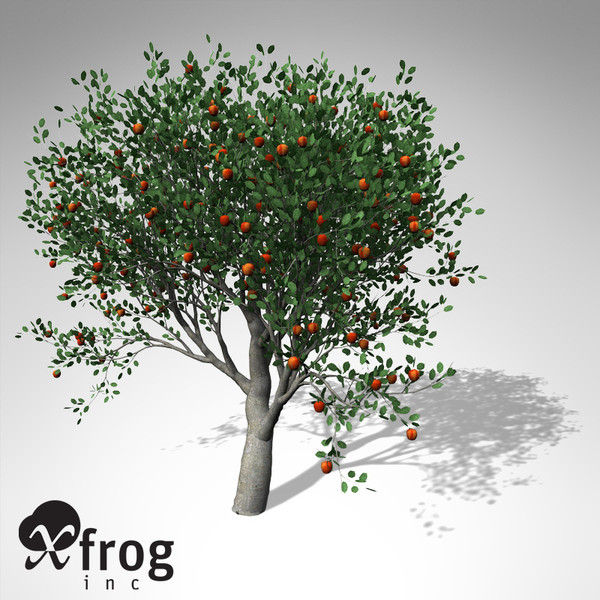 3d xfrogplants apple tree model - XfrogPlants Apple Tree... by xfrog