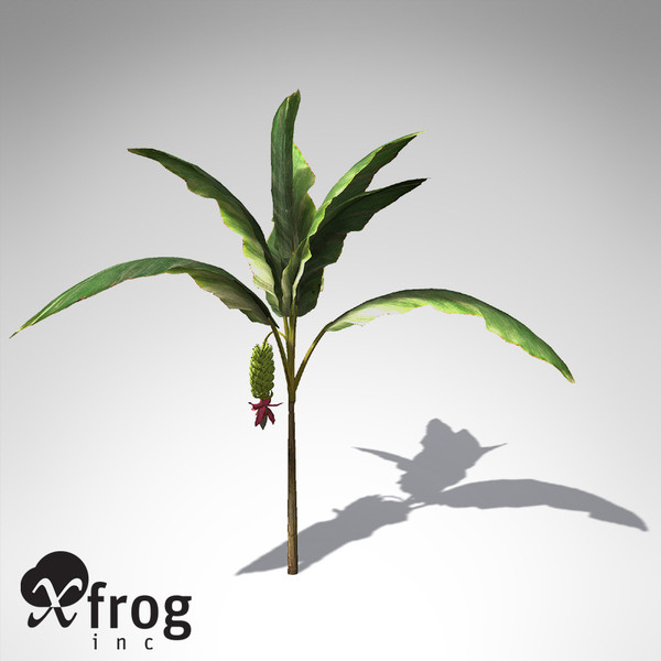 xfrogplants banana plant x 3d c4d - XfrogPlants Banana Plant FR... by xfrog