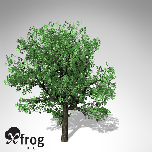 3d xfrogplants plum tree - XfrogPlants Plum Tree... by xfrog
