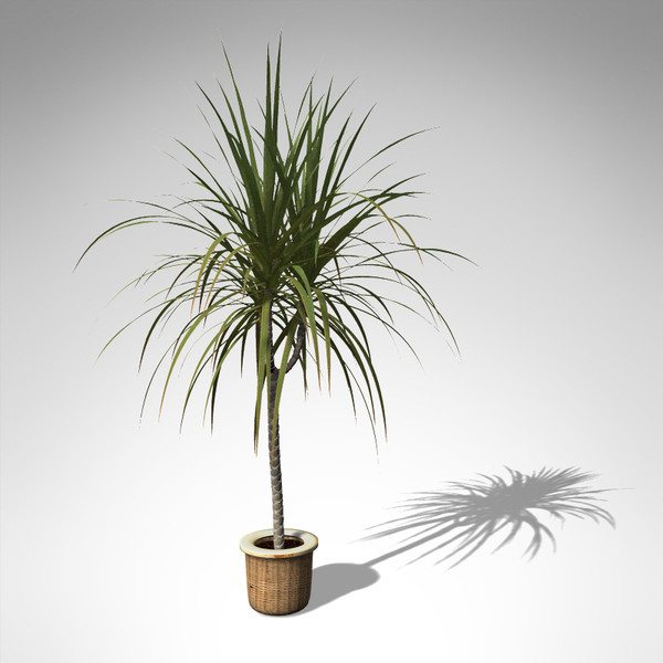 red-edge dracaena plant 3d model - XfrogPlants Red-Edge Dracaena... by xfrog