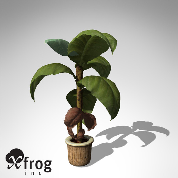 3dsmax xfrogplants banana plant x - XfrogPlants Banana Plant HP... by xfrog