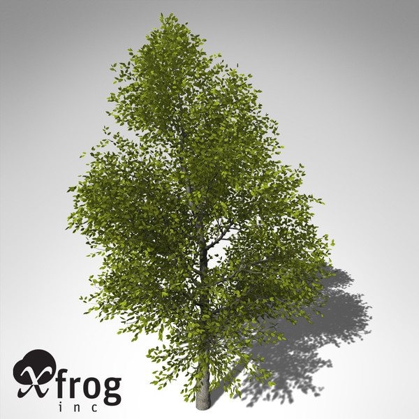 3ds xfrogplants japanese hop hornbeam - XfrogPlants Japanese Hop Hornbeam... by xfrog
