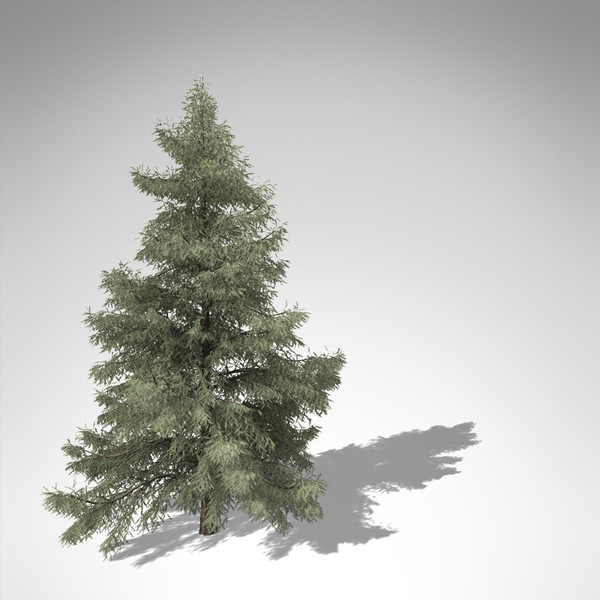 3d xfrogplants atlas cedar tree model - XfrogPlants Atlas Cedar... by xfrog