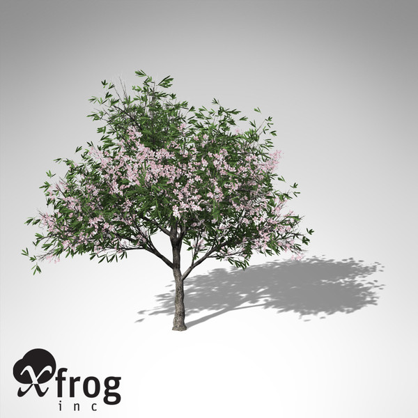 3ds xfrogplants oleander tree shrub - XfrogPlants Oleander... by xfrog