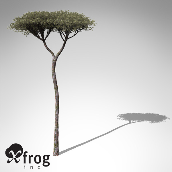 italian stone pine tree 3d model - XfrogPlants Italian Stone Pine... by xfrog