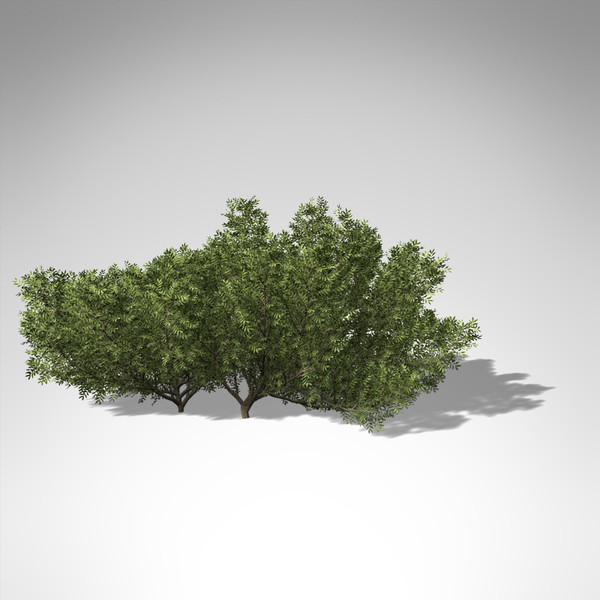 xfrogplants lentisk tree shrub 3d model - XfrogPlants Lentisk... by xfrog