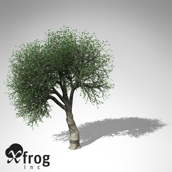 max xfrogplants cork oak tree - XfrogPlants Cork Oak... by xfrog