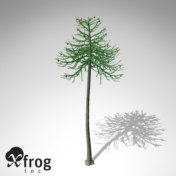 XfrogPlants Araucaria