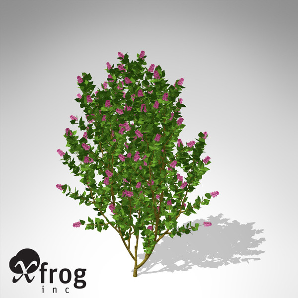 xfrogplants common lilac shrub 3d max - XfrogPlants Common Lilac... by xfrog