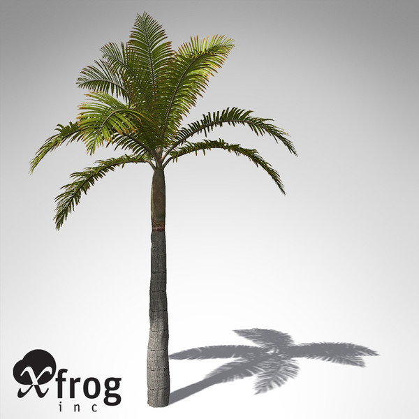 xfrogplants king palm plant max - XfrogPlants King Palm... by xfrog