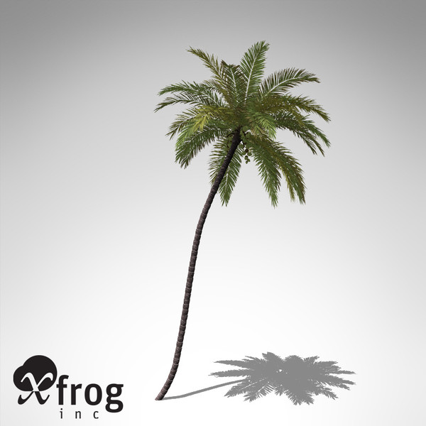 coconut palm tropical plant 3d model - XfrogPlants Coconut palm... by xfrog