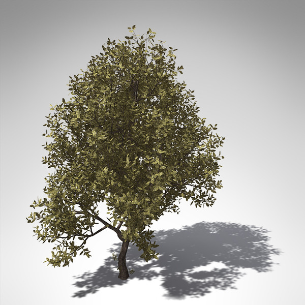 rubber tree plant 3d model - XfrogPlants Rubber tree... by xfrog