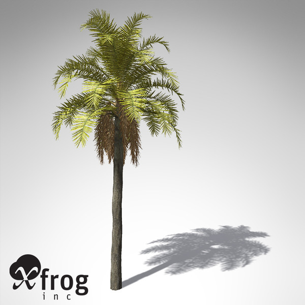 queen palm tropical plant 3d model - XfrogPlants Queen Palm... by xfrog