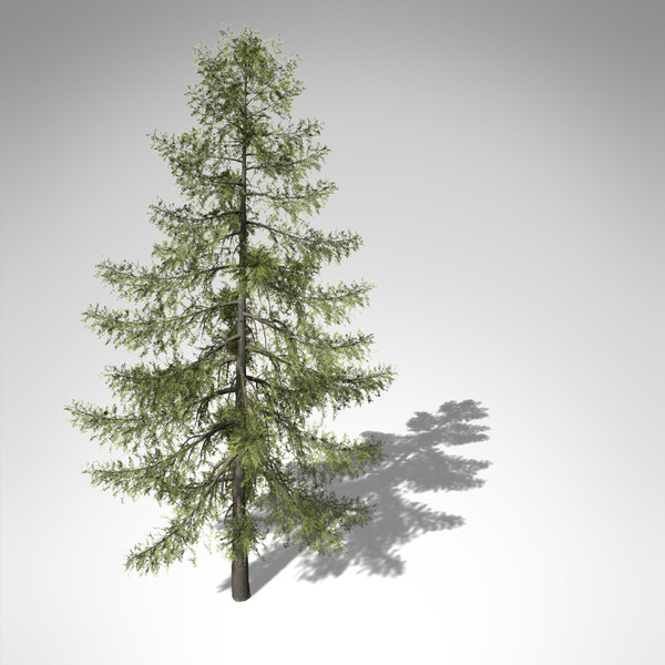 3d xfrogplants tamarack tree model - XfrogPlants Tamarack... by xfrog