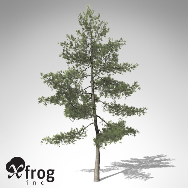 XfrogPlants Eastern White Pine 3D Models