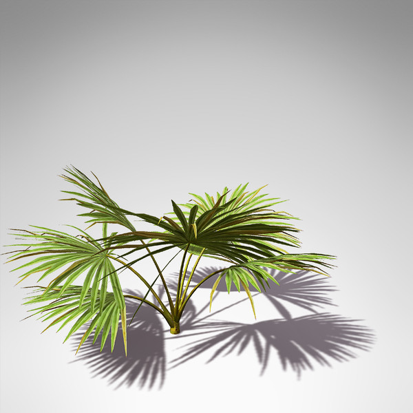 xfrogplants palmetto palm 3d model - XfrogPlants Palmetto... by xfrog